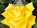 Rosa Goldkrone